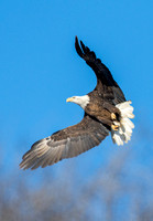 Eagles, Clarksville, MO